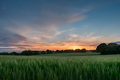upon the fields of barley (g a millington) Tags: wheat barley fields sunset skyscape sky country countryside bucolic treeline billinge