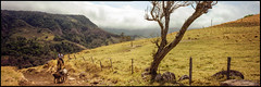 Somewhere in Costa Rica. (tonywright617) Tags: cattle cowboy costarica monteverde cloudforest fujicag617 panoramic kodak vps6006 iso100 mediumformat 120 film analogue fullframe