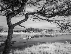 148-2017-365 Pudmore Pond, Thursley Common (graber.shirley) Tags: infrared thursley