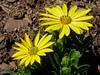 Au jardin (JMVerco) Tags: fleur flower fiore flickrchallengegroup