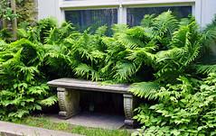 Bench Reserved... (+David+) Tags: ferns bench reserved warnercastle highlandpark