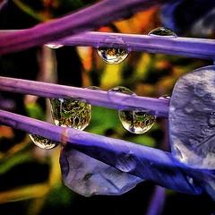 Monsoon (abhishekskumar) Tags: water droplet naturelover nature haarp love flower stem waterdrop planetearth