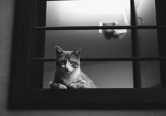 _SKN7839 (iliya.dimitrov) Tags: cat eye plovdiv street bnw fuji fujifilm xt1 view