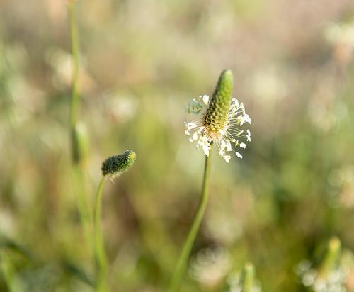 Green summer ©  Andrey