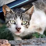 Toda una colonia de #gatos sin #esterilizar. Ya tienen trabajo los de la #protectora #barcelonagatigos  #gatoscallejeros #cats #photocats #instacats #neko #meow #gatze #gatto #koshka #catsofworld #catsofinstagram #streetcats #animalaugh thumbnail