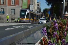 4001 on the Rosie Hackett Bridge, 17/6/17 (hurricanemk1c) Tags: railways railway train trains luas light rail lightrail alstom citadis 2017 dublin crosscity newline gaugerun testrun firstrun 4000series 4001 rosiehackettbridge