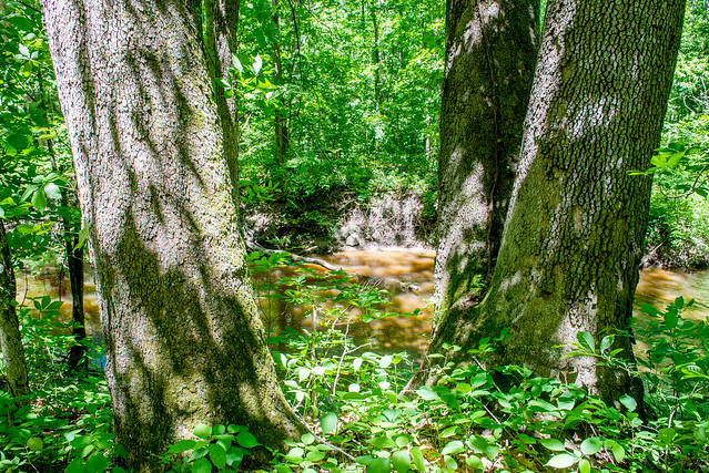 Bicentennial Woods Nature Preserve - June 7, 2017