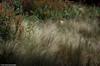 Les florilèges du béton (photos.osmose) Tags: ambiance art zen zénitude zonehumide zenarbresparcboisbonsaïcampagne évasion extérieur regard rêverie urbain ombrelumièreinsolitetempssoleil paysage promenade paysages port soleil sable feuilles floral forêtexpressioncouleursarbrescampagnebordsducanalombre fleurs jardins jardin japon lumière littoral exploration campagne couleurs composition ville vue visites ballade nature