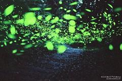 白天不懂夜的黑 ([M!chael]) Tags: nikon f3hp nikkor 5014 ai kodak 500t v3 5219 film moviefilm motionpicturemoviefilm taiwan hsinchu night nature