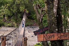 _DSC4796.jpg (MudflapDC) Tags: plains serian eastafrica kenya safari bridge marariver maranorth ngareserian maasaimara grassland rope vacation wildlife mara alexwalker melissa