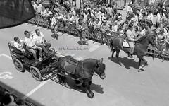 Día de San isidro. Romería en Alameda(Málaga) (lameato feliz) Tags: alameda fiesta romería caballos gente