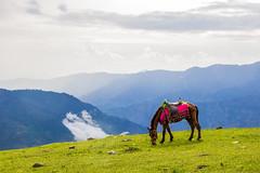 The Horse ..!! (mimalkera) Tags: kaghanvalley naran kaghan shogran siripaye payemeadows lakesaifulmalook travelpakistan travelbeautifulpakistan travel wanderlust