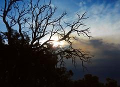 .Sunset drama (LeelooDallas) Tags: western australia bannister sunset eucalyptus sun tree landscape bush sky cloud dana iwachow nikon s9200