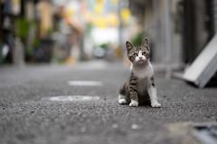 猫 (fumi*23) Tags: ilce7m2 sony 85mm fe85mmf18 sel85f18 cat kitten katze bokeh dof street alley α7ii ねこ 猫 路地 emount ソニー 仔猫 miyazaki 横丁 animal gato