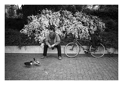Man with Ducks – Ilford Delta 400 (magnus.joensson) Tags: denmark copenhagen street contax t2 contaxt2 ilford delta 400 develop adox adonal 125 epson v800 scan