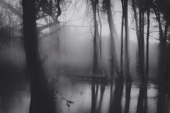 Drenched (-mtnoxx-) Tags: moody landscape wet water trees gloomy longexposure pond forest icm ethereal