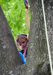 DSC_1284 (Montgomery Parks, MNCPPC) Tags: popupinmontgomeryparks bethesda treeclimbing climbatree tree climbingtrees kids children boys girls arborists elmstreeturbanpark spring may may2017 leaves treetrunks toddler