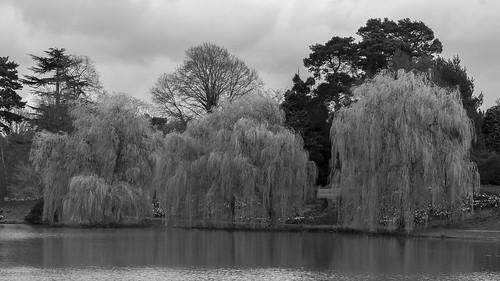 Black and White Landscape - Hever Castle Gardens
