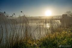 Obelisk Bridge mist (mythicalireland) Tags: mist fog sunrise dawn rising sun river boyne valley obelisk bridge oldbridge battle site flowing water reflection reeds grass sky landscape drogheda louth meath ireland