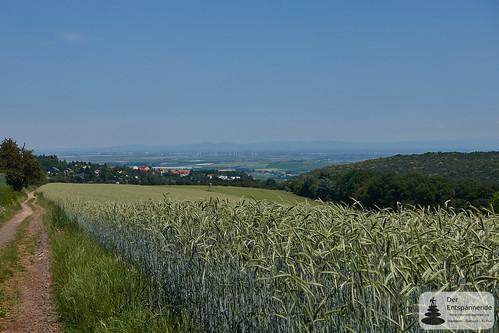 Ausblick über Battenberg auf die Rheinebene