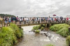 _RJS8339 (rjsnyc2) Tags: 2017 argentina brazil iguazu landscape nikon photographer remotesilver remoteyear richardsilver richardsilverphoto richardsilverphotography southamerica travel travelphotographer travelphotography water waterfalls