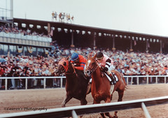 Affirmed vs Alydar, Preakness 1978 (lauren3838 photography) Tags: kodachrome cauthen velasquez laurensphotography lauren3838photography filmphotography horses triplecrown pimlico thoroughbredracing thoroughbreds horseracing horsepower racetrack racehorse preakness preakness1978 1978 baltimore md maryland jockeys racinghalloffame racing stevecauthen affirmed alydar jorgevelasquez