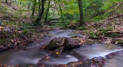 The Forest Stream (Vyc_Majoris) Tags: november autumn long exposure nx mini wide angle forest water rock leaves samsung nature tree fall yalova turkey