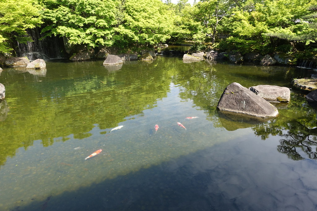The world 39 s best photos of carp and japan flickr hive mind for Jardin kokoen