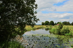 Am Warsingsfehnkanal / Moormerland-Warsingsfehn (l)