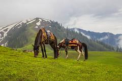 IMG_9501 (mimalkera) Tags: kaghanvalley naran kaghan shogran siripaye payemeadows lakesaifulmalook travelpakistan travelbeautifulpakistan travel wanderlust