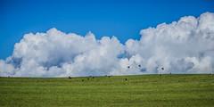 Blue sky thinking (JmiaJ) Tags: green field rooks clouds bluesky blueskythinking white fluffy idyllic mindful mindfulness wishing farawar hills overthehills thefuture conceptual