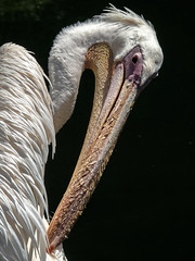 care of the body (okulario) Tags: pelican