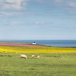Colours of early Summer thumbnail