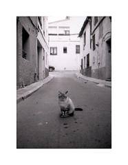 Kitty (Salva G.) Tags: olympus pen ee2 lomography film earl grey 100 black white cat gat kitty blackandwhite blancoynegro blancinegre bn bw olympuspenee2 mediona portrait filmphotography analog analogic analogica halfframe street streetphotography