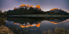 Golden Peaks (Margarita Genkova) Tags: sunrise reflections calm tranquility serenity nature canmore quarrylake alberta pristine yyc rockymountains grass trees bluesky goldenpeaks gold