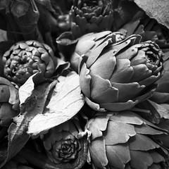 Arty Shock (Ren-s) Tags: black white blackandwhite blackwhite bw noir blanc noiretblanc noirblanc artichok artichaut légume vegetable végétal plante vegetal marché market belgique belgium bruxelles brussels europe olympusm1442mmf3556iir olympus project projet projet52 project52 semaine21 week21 carré square bokeh flou feuille leaf fleur flower