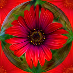 Red Daisy Art (ladyinpurple) Tags: africandaisy red pspxi photofiltre
