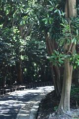 IMG_6073 (asaco_1) Tags: 鎌倉 北鎌倉 kamakura canoneoskissx7 kissx7 ダンボー