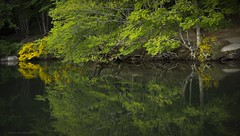 Reflections... (ChusPS) Tags: unesco montseny barcelona catalonia catalunya nature color green forest beech lake nikon nikkor manfrotto santafe foret spring primavera bosc bosque lago water agua may