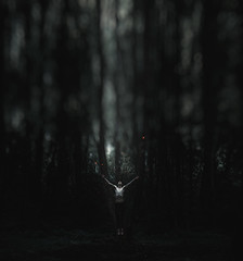 Beam me up... (dark.indigo) Tags: portrait popular people posing portait pose fly levitate levitation dark scary nature forest wood woods guy model male contrast dramatic moody mood shirtless art artwork trendy abstract surreal fantasy digital photography photoshop photomanipulation