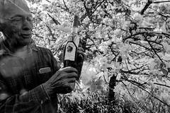 Jean-Marie et ses pruniers 6 (C'est géant!) Tags: humain rencontre jeanmarie bergeron simon emond fleur alcool vin prune verger metabetchouan saguenaylacsaintjean lacsaintjean saguenay