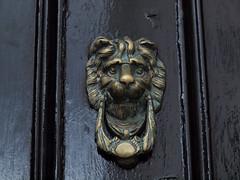 the cowardly knocker (164/365) (werewegian) Tags: knocker lion door meek glasgow werewegian jun17 365the2017edition 3652017 day164 13jun17