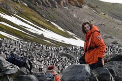 Ethan among the Chinstrap Penguins (Scott Ableman) Tags: shetlandislands baileyhead chinstrappenguins chinstrappenguin chinstrap penguin nationalgeographicexpeditions lindbladexpeditions nationalgeographicorion antarctica parkas orange orangeparka