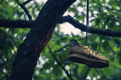 Hangin' (jonathanlander1) Tags: sony a6300 shoes sonyalpha alpha 210mm crispy adventurous goodvibes