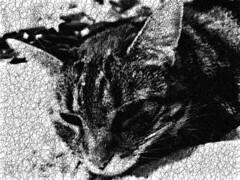 Scribbled Tigger 2 (sjrankin) Tags: 16june2017 grayscale processed scribble curves animal cat tigger closeup yubari hokkaido japan