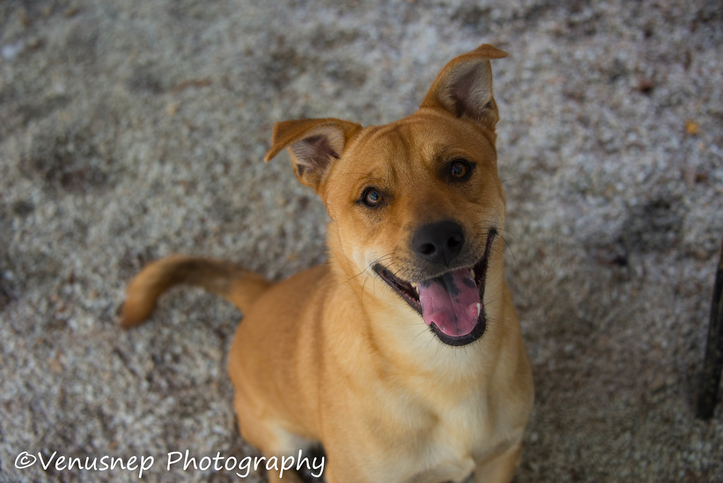 Rescue Dogs Adelaide Adopt