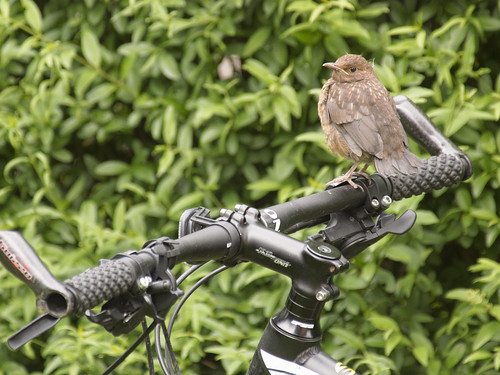 Die Sitzstange an meinem Fahrrad!