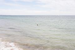 Glenelg SA, 2017 (jamiehladky) Tags: glenelg sa southaustralia adelaide australia coast beach waves canon digital 5diii jamiehladky hladky swimmer landscape