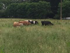Cherry Grove Farm (Triborough) Tags: nj newjersey mercercounty lawrencetownship lawrenceville cherrygrovefarm