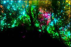 20170605-065 (sulamith.sallmann) Tags: natur blur bunt colorful effect effekt filter folientechnik nature unscharf brandenburg deutschland deu sulamithsallmann